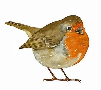 Bird Robin Watercolor Painting Aquarelle Limited Edition