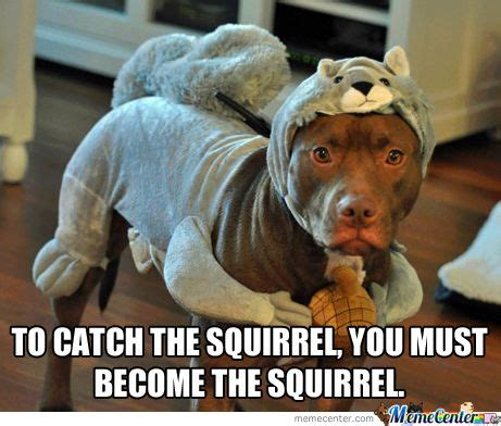 Squirrel Memes - to catch the squirrel you must become the squirrel so molly stupid memes that are