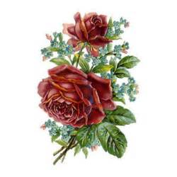 burgundy roses scrap pictures flower scraps antique floral