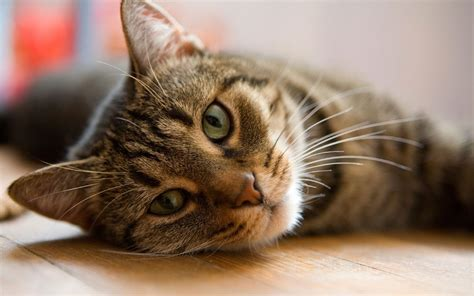 sick cat tell ways istock