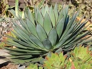 Plantes Grasses Extérieur : plantes grasses tous nos sujets ~ Dallasstarsshop.com Idées de Décoration