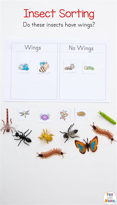 preschool insect theme sorting worksheet bug activities 970 | insect wings sorting activity