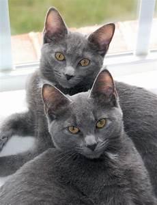 File:Korat Sisters.jpg - Wikipedia