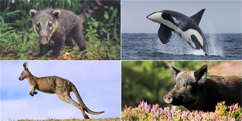 14 Rare Wild Animals You Can See In The UK Wildlife