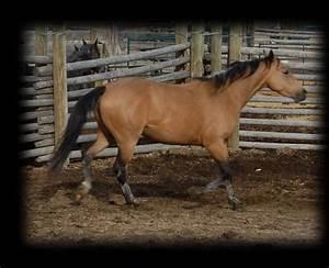 696 best images about Buckskin on Pinterest | Horses for ...