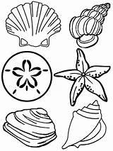 Coloring Pages Seashell Printable Shells Seashells Sea Shell Colouring Sheets Template Print Printables Sheet Ocean Templates Under Children Ariel Different sketch template