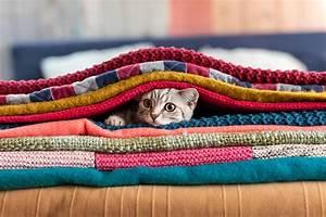 Flöhe Bei Katzen Bekämpfen : fl he bei katzen plagegeister im flauschigen fell lieblingstier ~ Orissabook.com Haus und Dekorationen