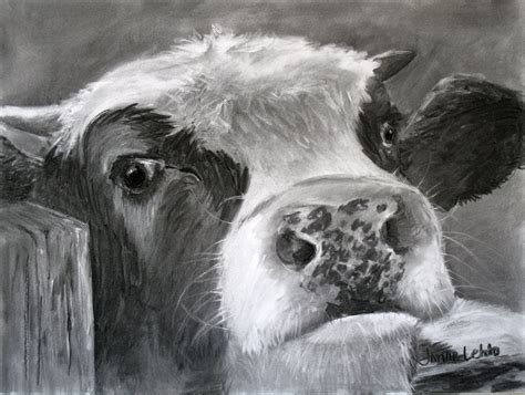 charcoal drawing bovine curiosity sold pencils pastels