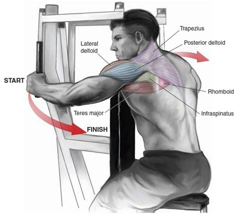 Pec Deck Flyes Target Muscles by Shoulders Bo Dy