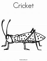 Cricket Coloring Worksheet Crickets Insect Pages Print Grillos Animal Twisty Noodle Twistynoodle Printable Bug Insects Sheet Tracing Learning Dibujos Built sketch template