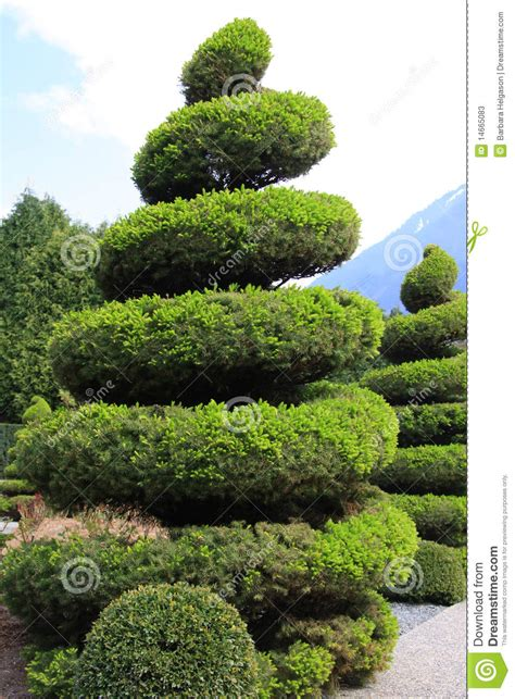 Large Evergreen Topiary Stock Photos  Image 14665083