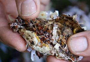 Frequently Asked Questions | FAQs | Worm Composting ...