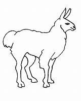 Llama Coloring Lama Llamas Line Printable Kolorowanki Colorear Dzieci Dla Malvorlagen Animal Freeprintablecoloringpages sketch template