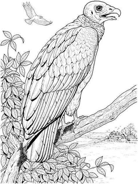 Kleurplaat E by Vulture Coloring Pages And Print Vulture