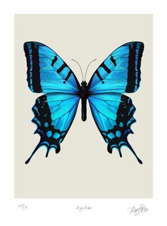 blue butterfly   clip art  clip art
