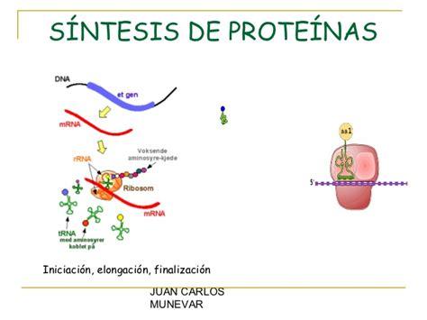 biologia molecular de la celula proteinas