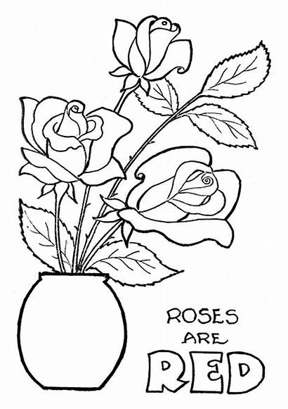 Coloring Rose Pages Roses Flowers Worksheets Printable
