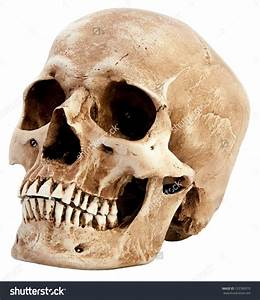 List Of Synonyms And Antonyms Of The Word  Skull