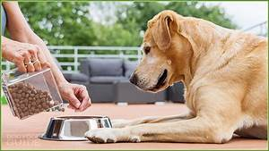 Best Dry Dog Food Top Kibble Brands Of 2019 Reviewed Rated