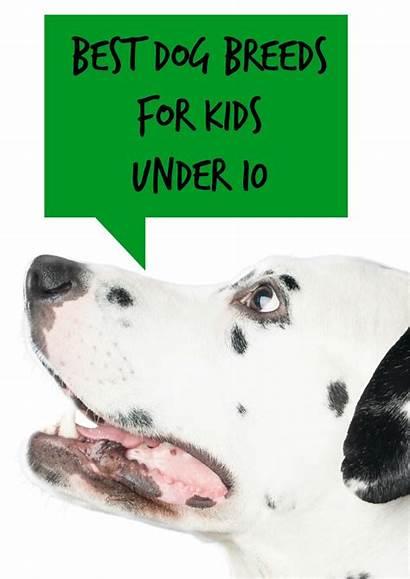 Dog Breeds Under Dogvills Dogs Children