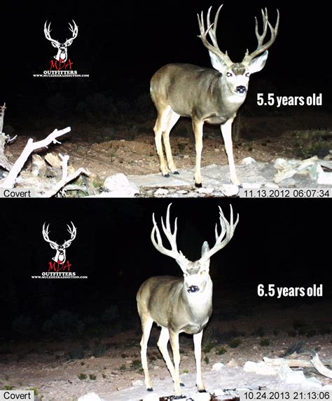 what a difference a year makes badgers bucks nba draft success the key to antler growth age genetics nutrition gohunt