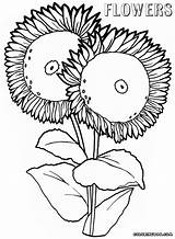Flower Coloring Pages Flowers sketch template