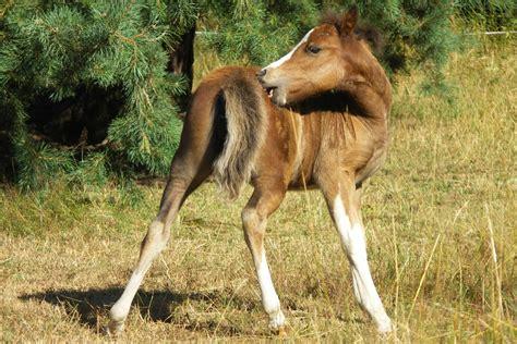haarlingsbefall beim pferd die ursachen sind vielfaeltig