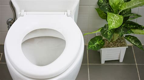 Clogged Toilet? No Problem!  Mister Quik Home Services