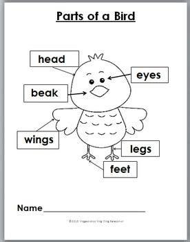 bird movement activities  literacy fun preschool