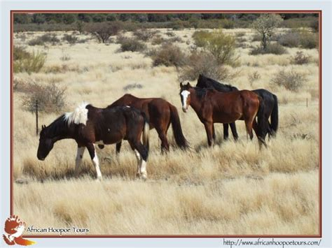 africa horses cape town south wild