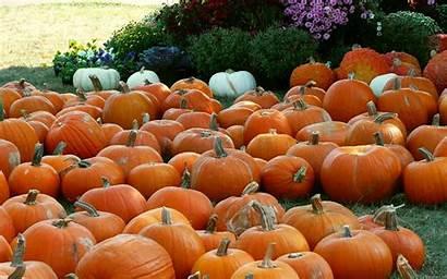 Pumpkin Fall Wallpapers Desktop Autumn