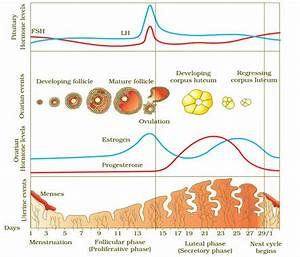 Menstrual Cycle - AIPMT Biology Study Material/Notes ...