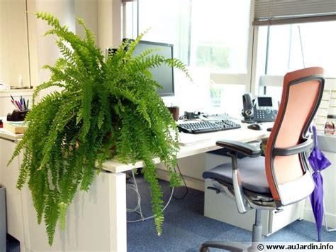 plante de bureau des plantes pour le bureau