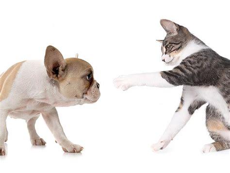 dog  stop chasing cats vetdepot blog