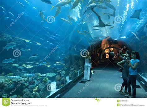 dubai aquarium  dubaimall editorial photography image