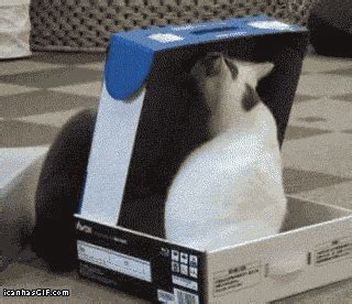 funny cat gifs   cool funny
