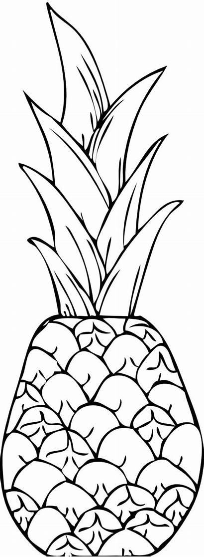 Pineapple Drawing Coloring Exotic Clip Line Cayenne