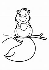 Coloring Squirrel Squirrels Cartoon Printable Colour Animal Library Clipart Popular sketch template