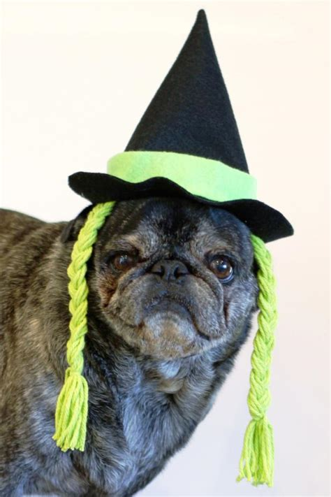 halloween witch hat   dog  tos diy