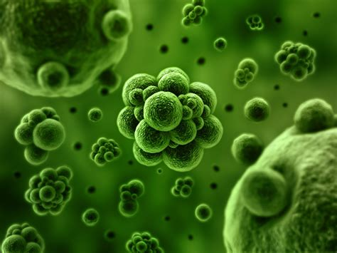 15 Shocking Facts About Microorganisms Living In Your Body