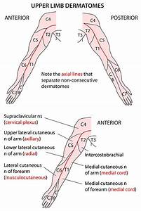 The 25  Best Upper Limb Anatomy Ideas On Pinterest