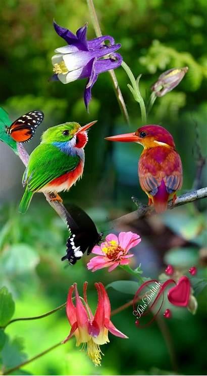 Birds Animals Funny Pretty Bird Nature Exotic