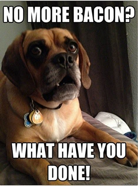 T Dog Memes - shocked dog meme shows a pup in a state of perpetual surprise
