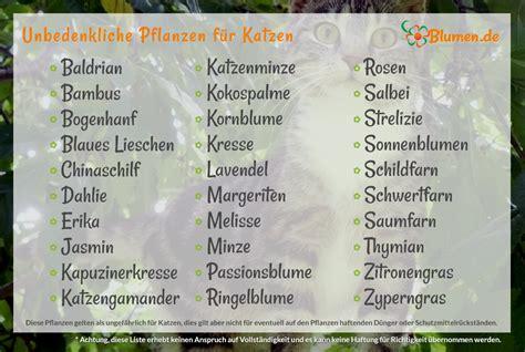 unbedenkliche pflanzen für katzen blumen de pflanzen f 252 r katzen welche pflanzen sind geeignet welche giftig