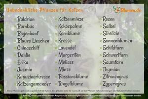 Winterharte Pflanzen Liste : pflanzen f r katzen welche pflanzen sind geeignet welche giftig ~ Eleganceandgraceweddings.com Haus und Dekorationen