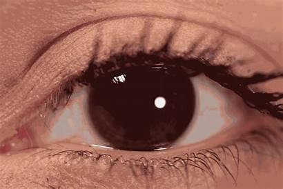 Blink Happens Eye Science Vocativ Biology Culture