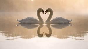 Duck love birds kissing in lake HD Wallpapers Rocks