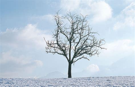 trees shaken not stirred
