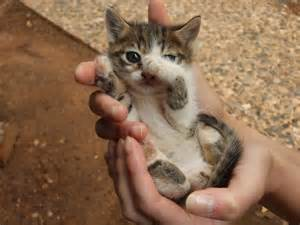tiny cats small smaller the smallest cat baby cat 10 days