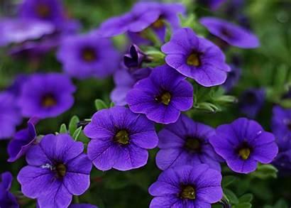 Purple Flowers Flower Cool Nature